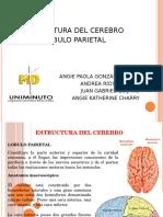 presentacion lobulo parietal uniminuto.pptx