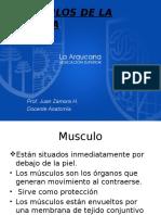 Musculos Cabeza Osea