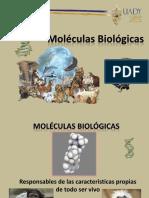 Moléculas biológicas