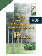 Palmeiras Produtoras Palmito