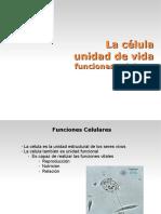 celulatema1parte2buena.pdf