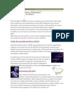 RESUMEN DE ADN.docx