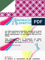 Anomalías en La Gametogénesis