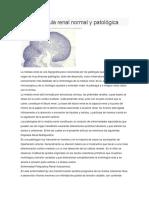 La Médula Renal Normal y Patológica