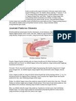 antom pankreas