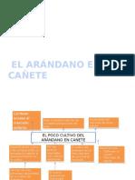 Analisis de Mercado Arandano Ultimaparte