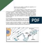 Epigenómica.pdf