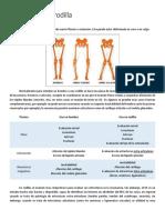 Ultrasonido-de-rodilla POWARE.pdf