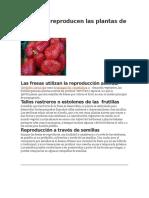 Cómo Se Reproducen Las Plantas de Frutilla