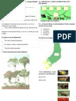 Evaluación de Biología   selva misionera 2017.docx