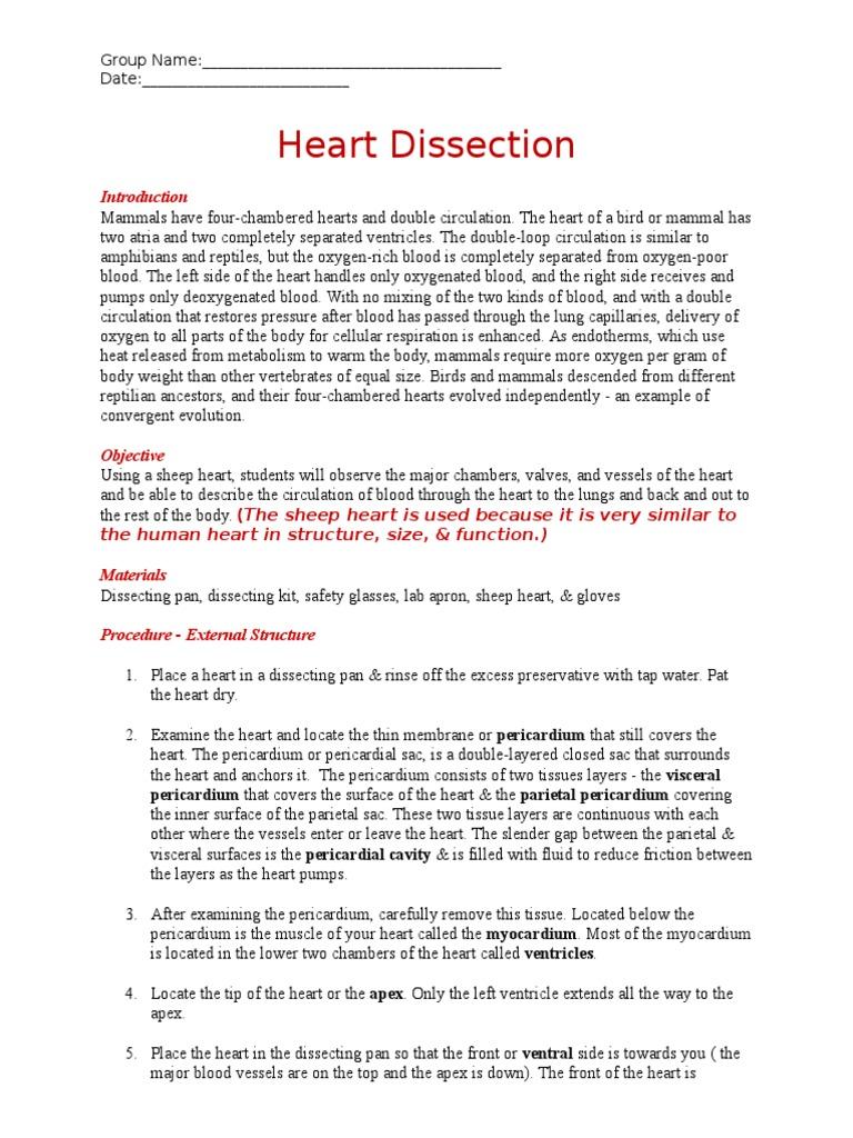 Heart Dissection Worksheet Heart Valve Heart