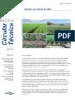 Irrigação na cultura do alho.pdf