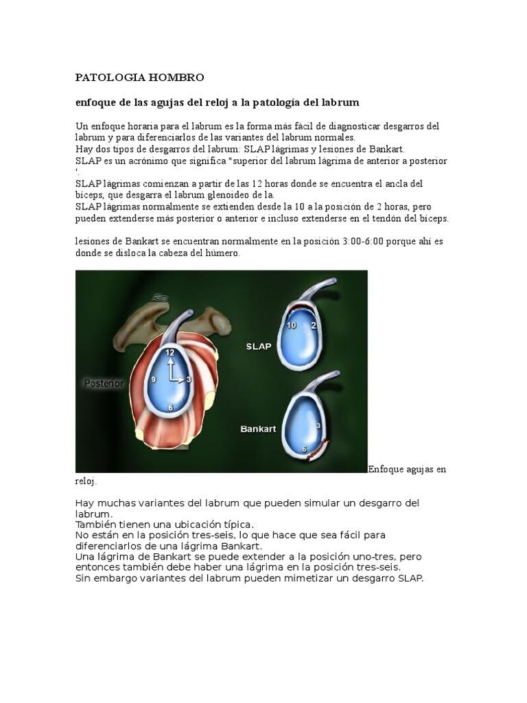 Hermosa Acl Anatomía Lágrima Composición - Anatomía de Las ...