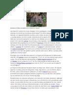 Características Las Ratas
