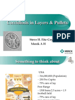 Coccidiosis in Layers Pullets