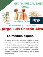 MEDULA ESPINAL Y SISTEMA NERVIOSO PERIFERICO.pptx