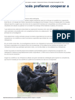 Los chimpancés prefieren cooperar a competir — Noticias de la Ciencia y la Tecnología (Amazings® _ NCYT®)