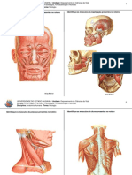 exercicio de fixação de miologia.pdf