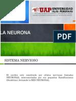NEURONA.pptx