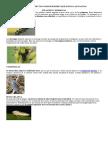Clases de Insectos Como Roedores Que Dañan Las Plantas