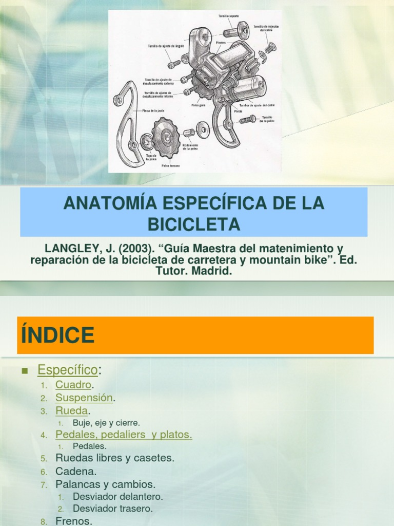 Anatomía Específica de La Bicicleta