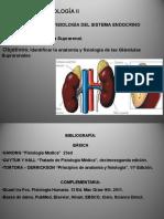 Corteza y Medula Suprarrenal Clase