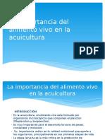 La Importancia Del Alimento Vivo en La Acuicultura