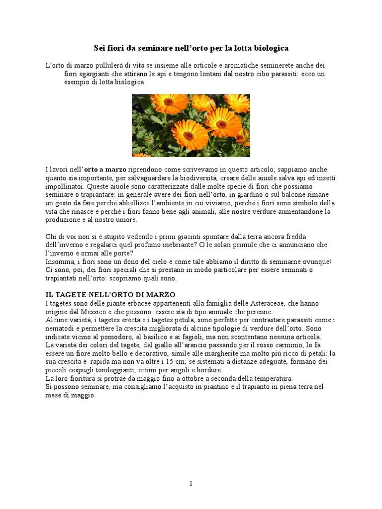 Fiori Da Piantare Nell Orto sei fiori da seminare nell.doc