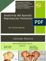 Anatomia Reproductor Femenino