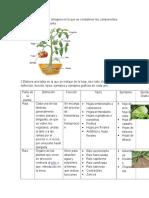 Componentes estructurales  de las plantas