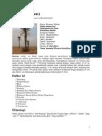 Kurma (Pohon) - Wikipedia Bahasa Indonesia