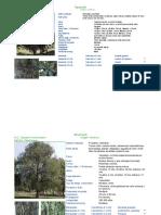 Fichas Tecnicas de Vegetacion Zmg - Semades