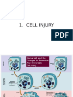 Class 2 Cell Injury Sent
