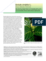 Morinda Species Profile