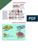 Clases de Bacterias 11-06-2015