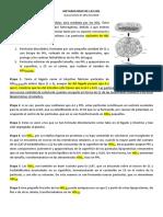 METABOLISMO_DE_LAS_HDL-2_2016_06_10_13_47_00_866