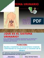 SistemSISTEMA URINARIOa Urinario