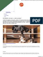 He Adoptado a Otro Gato…y ¿Ahora Qué Hago Affinity Petcare