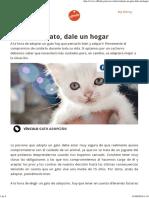Adopta un gato, dale un hogar   Affinity Petcare.pdf