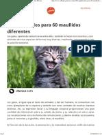 60 Significados Para 60 Maullidos Diferentes Affinity Petcare