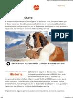 Perros de Rescate Affinity Petcare