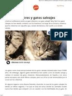 Gatos Silvestres y Gatos Salvajes Affinity Petcare