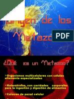 origendelosmetazoos-111016180958-phpapp01