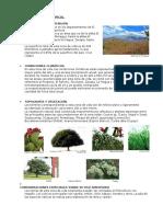 Monte_espinoso_Sub_Tropical_Guatemala.docx