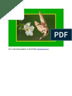 DeBar Hummingbird Article