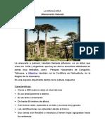 La Araucaria Chilena