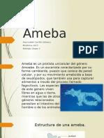 Ameba.pptx