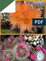 Pdf cactus encyclopedia
