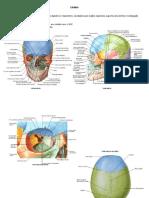 resumo ossos do crânio e seus acidentes anatômicos (1).docx
