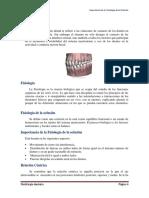 221898509 Fisiologia de La Oclusion